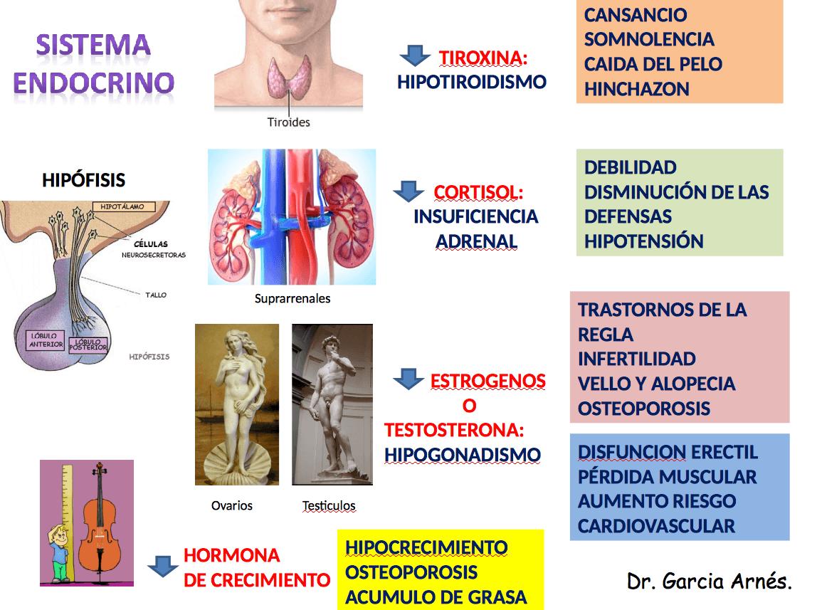 Endocrino Málaga